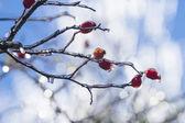 Frozen Rain (10) — ストック写真