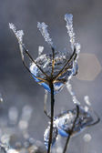 Frozen Rain (19) — ストック写真