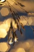 Frozen Rain (29) — ストック写真