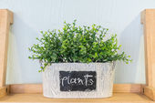 Grass in pots on wood rack — Stock Photo