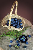 Still life with blueberries — Stock Photo