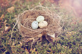 Three bird eggs in a nest — Stock Photo