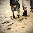 A woman walks with a dog — Stock Photo #39164441