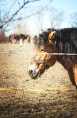 Horse in nature — Foto de Stock