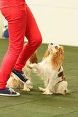 Dog dancing — Stock Photo