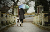 Woman with an umbrella walks with her dog in the rain outside — Stock Photo