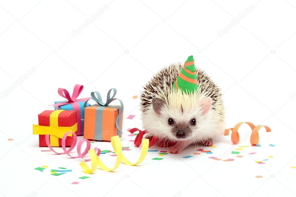 Открытка с днем рождения с ежиком и 711