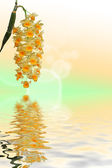 Orchids grape over water reflection — Stock Photo
