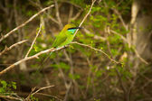Green exotic bird — Stock Photo