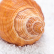 Shell — Stock Photo #39629553