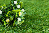Grass and flowers — Stock Photo