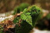 Green tree stump — Stock Photo