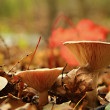 Three pale mushrooms — Foto Stock