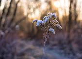 Teplé zimní slunce — Stock fotografie