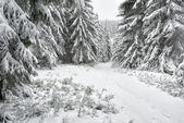Winter landscape in Polish Mountain - HQ — Stock Photo