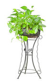 Tree in potted on white background. — Stock Photo