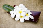 Plumeria blossom and leaves in the dish wood  — Stock Photo