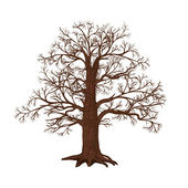 Oak without leaves on a white background — Stock Vector
