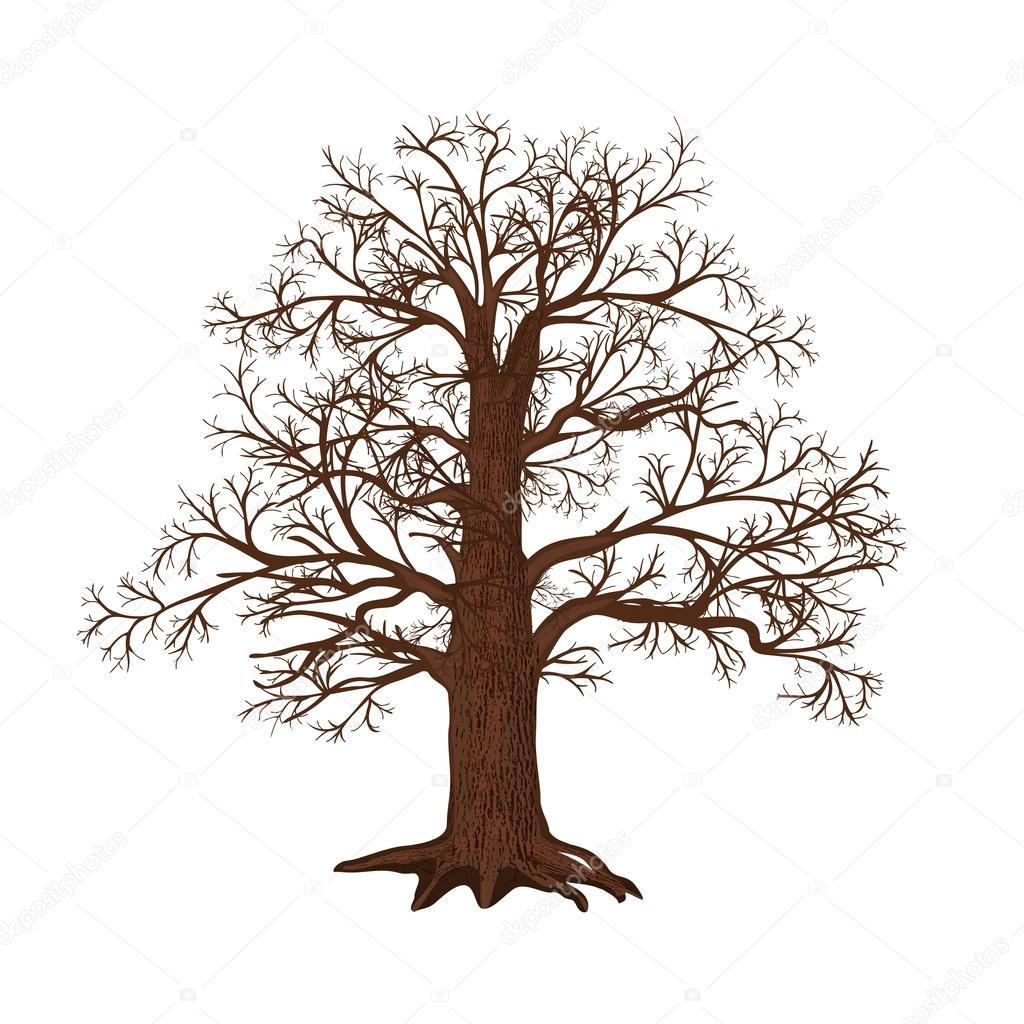 Дуб без листьев на белом фоне — Векторное изображение © M ...