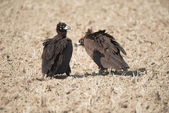 Birds of a feather stick together — Stock Photo