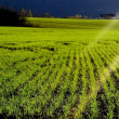 Sun rays on a field — Stockfoto