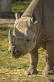 Rhino portrait — Stockfoto