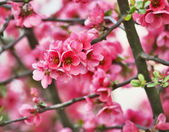 Blooming spring tree flowers — Stockfoto