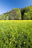 Spring or summer meadow and forest — Stock fotografie