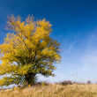 Stock Photo: Autumn landscape with yellow-colored aspen