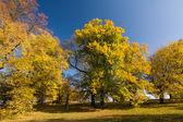 Autumn lime-trees against the blue sky — Stock Photo