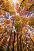 Look up in the autumn forest... — Stock Photo