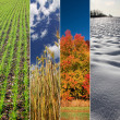Four season banners - spring, summer, autumn and winter — Stok fotoğraf