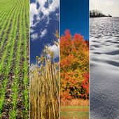 Four season banners - spring, summer, autumn and winter — Stock Photo
