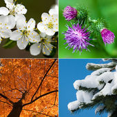 Four season — Stock Photo