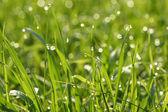 капли росы на лезвия травы — Стоковое фото