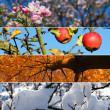 Four season - four horizontal banners — Stock Photo