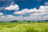 Summer countryside with green field and amazing blue sky with white clouds — Stock Photo
