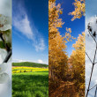 Four season vertical banners — Stock Photo #40224059