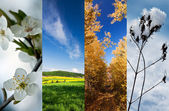 Four season vertical banners — Stock Photo