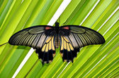Colorful tropical butterfly on green leaves photo — Stock Photo