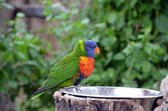 Single colorful tropical parrot photo — Stock Photo