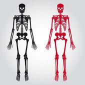 Skeletons - human bones set eps10 — Stock Vector