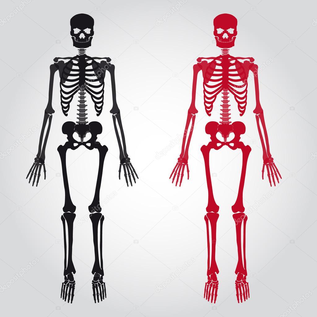 Танцы скелетов порно 11 фотография