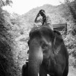 I,m in control , Thai elephan at Khaoyai National park in Thailand — Stock Photo