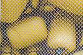 Yellow buoys behind a fishing net — Stock Photo