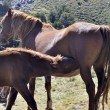 ������, ������: A horse with its colt