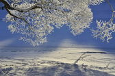 Winter nature — Stock Photo