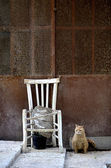 A gorgeous cat sitting near a broken chair — Zdjęcie stockowe