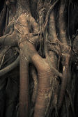Intertwining trunks and roots of trees — Stock Photo