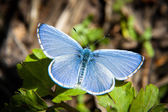 Beautiful Blue Butterfly — Stock Photo